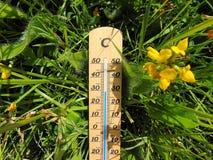 Thermomètre Celsius en bois s'étendant dans l'herbe à côté d'une fleur jaune photo libre de droits