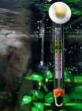 Thermomètre de l'eau Photo libre de droits