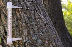 Thermometer auf einem Baum Heißer Sommer lizenzfreie stockfotos