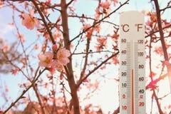 thermometer bij gebied van bloemen die weer op verandering wijzen royalty-vrije stock foto