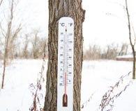 Thermometer, der am Baum hängt Lizenzfreie Stockfotos