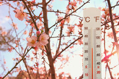 thermometer at field of flowers indicating weather change royalty free stock photo