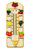 The Thermometer fruit model Stock Image