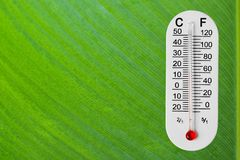 Thermometer on green leaf Royalty Free Stock Photography