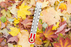 Thermometer for measurement of air temperature on the fallen lea Royalty Free Stock Images