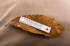Thermometer placed on a brown dry leaf Stock Images