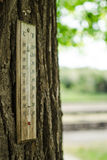 Thermometer on a tree trunk stock images