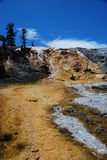 Thermophiles orange chez Mammoth Hot Springs Images libres de droits