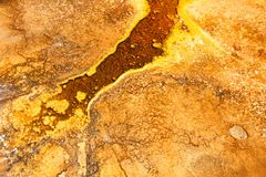 Thermophilic Bacteria in Yellowstone. Thermophilic bacteria thrive in the hot springs of the Upper Geyser Basin at Yellowstone National Park Royalty Free Stock Photos