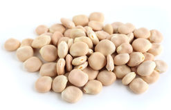 Thermos beans on white Stock Photography