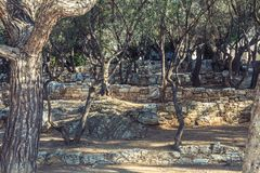 Therrace with Olive trees stock photography