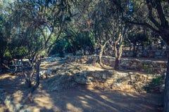 Therrace z drzewami oliwnymi fotografia royalty free