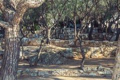 Therrace z drzewami oliwnymi fotografia stock
