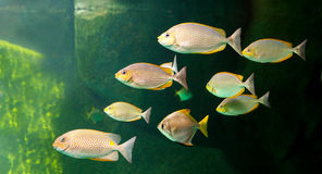 Thes Aquarium fish with coral and aquatic animals. Aquarium fish with coral and aquatic animals stock photo