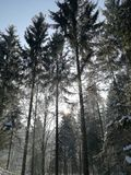 Theuerwanger Forst Áustria imagens de stock