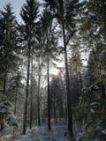 Theuerwanger Forst Österrike royaltyfri foto