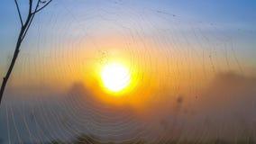 Thgrough de niebla de la salida del sol el web almacen de metraje de vídeo