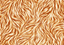 Thick animal warm brown hair texture Stock Image