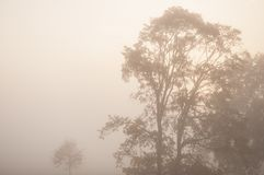 Thick autumn fog and colorful trees in the city park Royalty Free Stock Image