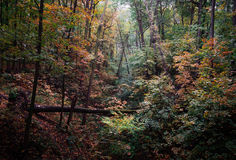 Thick autumn forest in October. On a cloudy day Royalty Free Stock Photography