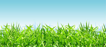 Thick bright green grass on a background of blue sky Royalty Free Stock Image