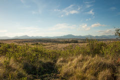 Thick Bush and distant mountains in South Africa Royalty Free Stock Photo