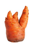 Thick clumsy carrot Royalty Free Stock Photography
