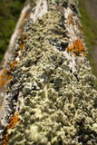 Thick Colorful Lichens on Old Wooden Fence Post, with upper post leading away from foreground Stock Photos