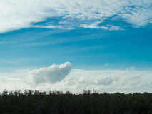 A thick dark green mangrove forest contrast the white clouds and Stock Photo
