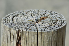 Thick fence post detail. Royalty Free Stock Image