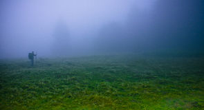 Thick fog. Beech forest in thick, damp fog, mist stock photo