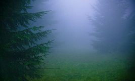 Thick fog. Beech forest in thick, damp fog, mist royalty free stock photography