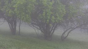 Thick fog covers forest landscape. Summer. Green trees. stock video footage