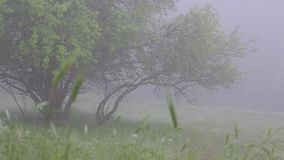 Thick fog covers forest landscape. Summer. Green trees. stock footage