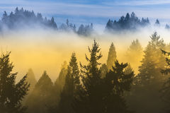 Thick fog over trees and blue sky Royalty Free Stock Photo