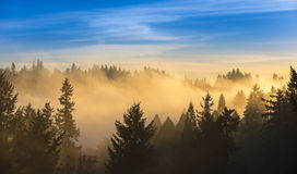 Thick fog over trees and blue sky Stock Image
