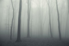 Thick fog in a spooky dark forest in winter Royalty Free Stock Photos
