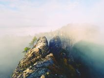 The thick fog is swinging between rocks and strip over high trees in spruce forest. Fairy daybreak in silent rocks. Royalty Free Stock Photography