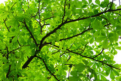 Thick foliage. Thick green foliage under tree. Nature composition Royalty Free Stock Photo