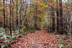 Thick Forest with Autumn Leaves Royalty Free Stock Photo