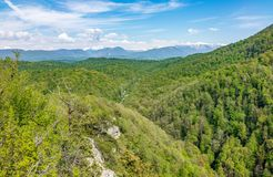 Thick forest in a green valley with power lines. Snow capped mountains visible on the horizon stock images