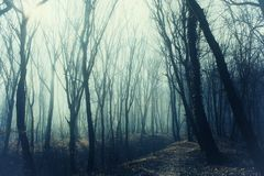 Thick forest with path in mysterious fog royalty free stock photography