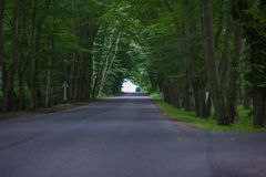 Thick forest tunnel and through the road stock photography