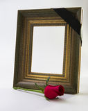 Thick gold picture frame with rose Royalty Free Stock Images