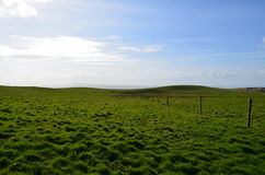 Thick Grass Field Abutting the Cliff`s of Moher in Ireland Stock Images