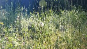 Thick grass stock footage