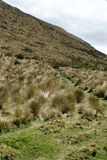 Thick grass on a slope in the Antisana Ecological Reserve, Ecuador Stock Photo