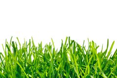 Thick grass on white background Royalty Free Stock Photos