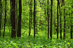 Thick green forest Stock Photo
