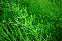 Thick green plant vegetation. In summer Royalty Free Stock Photos